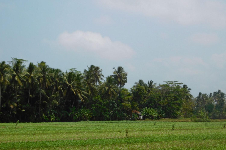 Genjot Produksi Pangan Nasional, Peringatan Hari Pangan Sedunia Promosikan Pertanian di Lahan Rawa