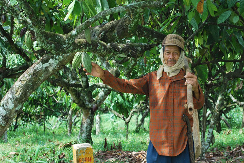 Sekilas Petani Kakao Indonesia