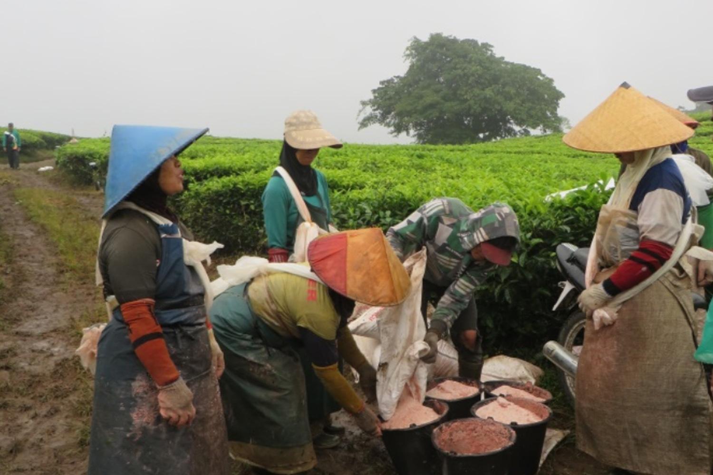 Penggunaan Pupuk Kimia Yang Tidak Terkendali Berkontribusi Pada Kerusakan Tanah dan Pemanasan Global