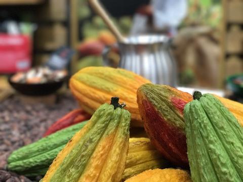 ICCRI 09 : Upaya Kembalikan Kejayaaan Kakao Indonesia