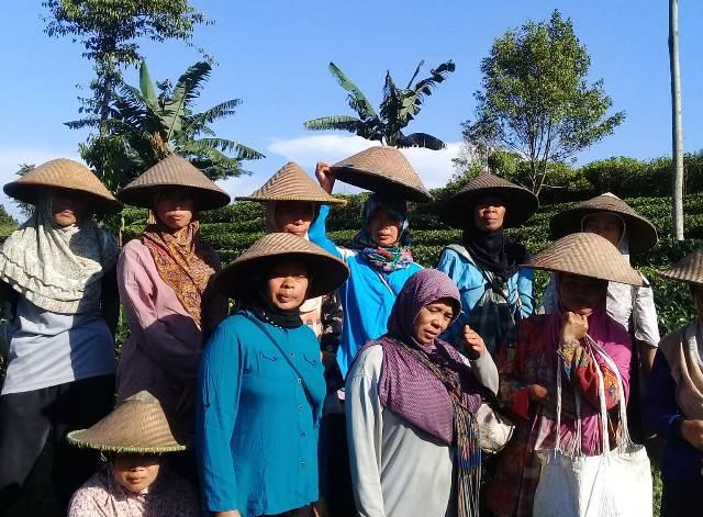 Pantang Menyerah Jadi Semboyan Gambung Lestari Wangi