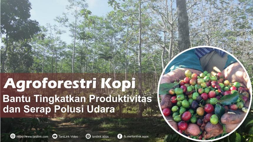 Selain Tingkatkan Produktifitas, Agroforestri Kopi Bantu Serap Polusi Udara