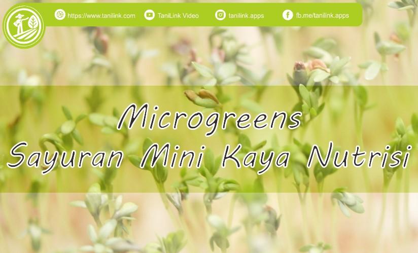 Microgreens, Sayuran Mini Kaya Akan Nutrisi