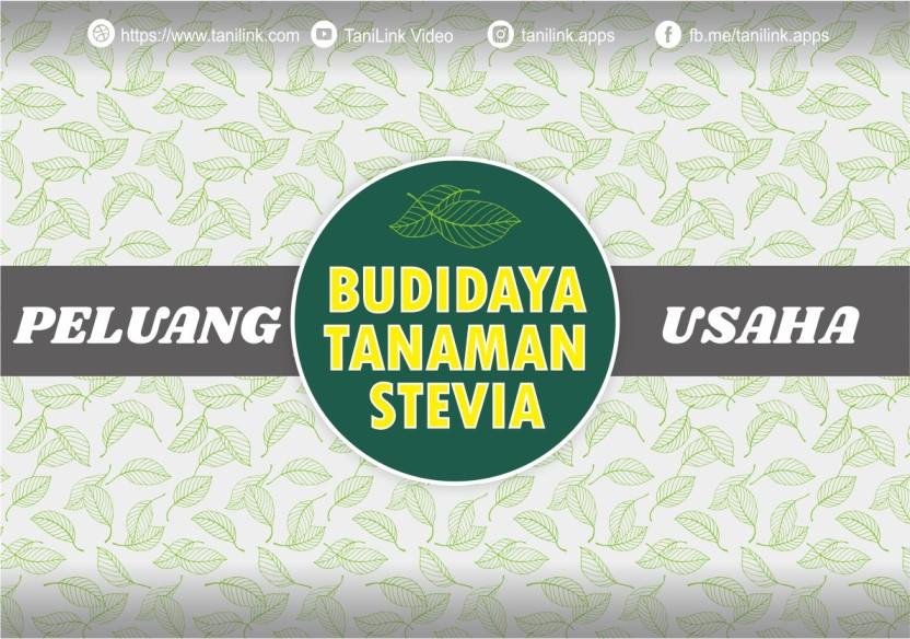 Peluang Usaha : Manisnya Budidaya Stevia