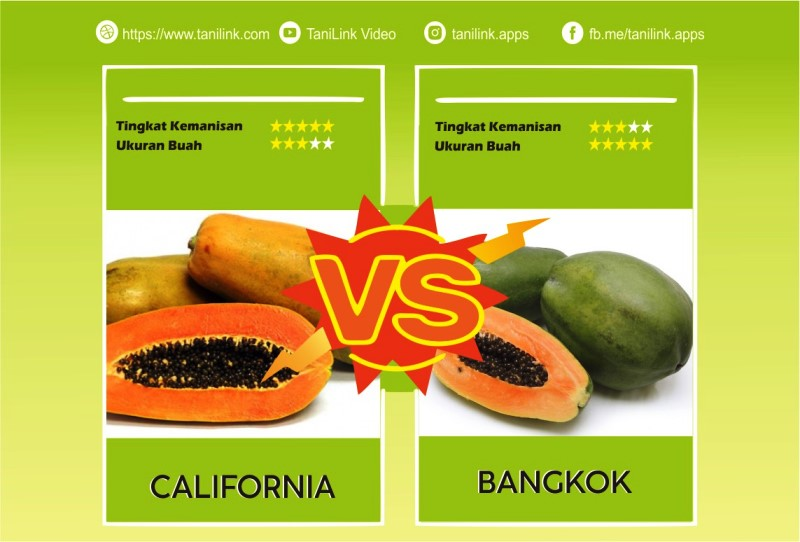 Pilih Pepaya California atau Pepaya Bangkok? Cek Perbedaanya!
