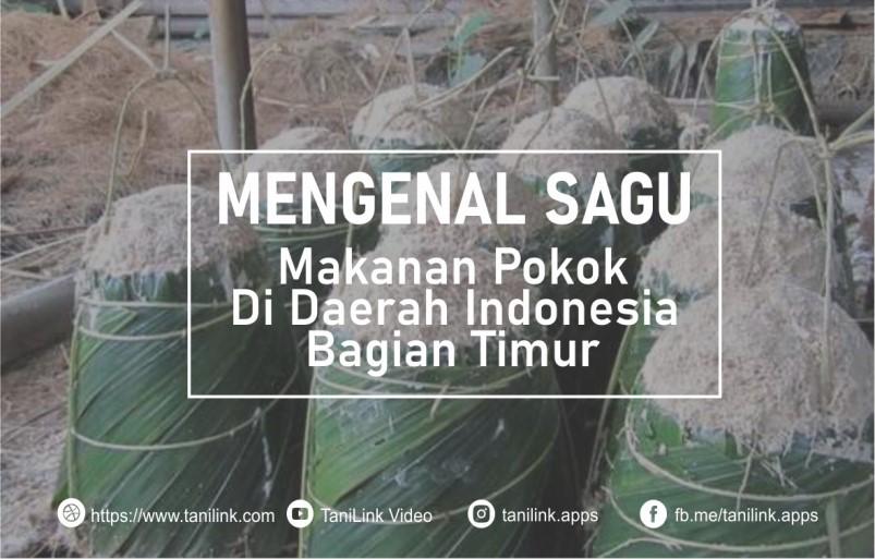 Mengenal Sagu, Makanan Pokok Di Daerah Indonesia Timur