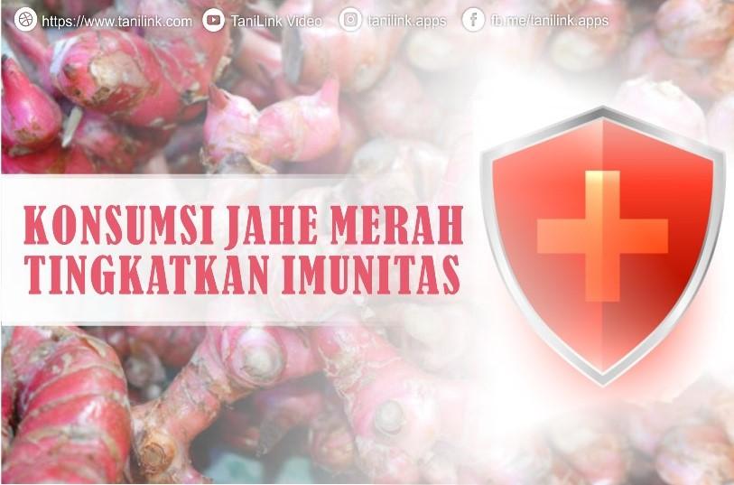 Konsumsi Jahe Merah Tingkatkan Imunitas