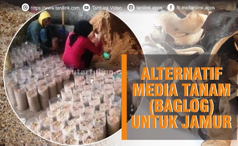 Alternatif Media Tanam Untuk Jamur (Baglog)