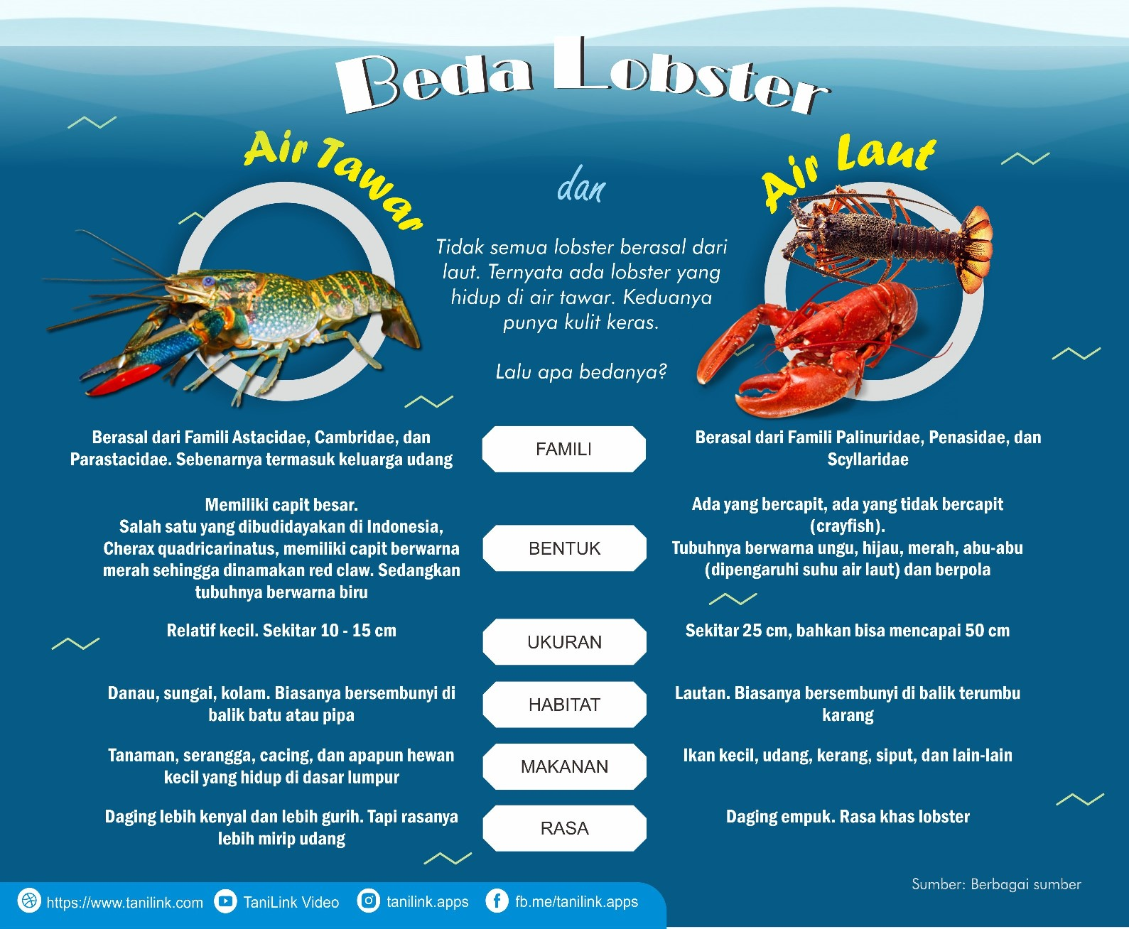 INFOGRAFIS : Beda Lobster Air Laut dan Lobster Air Tawar
