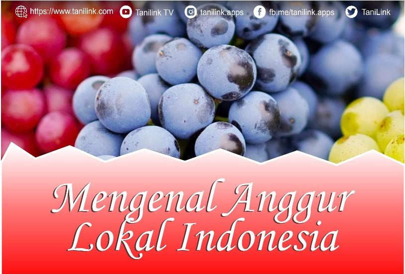 "Mengenal Anggur ""Lokal"" Indonesia"