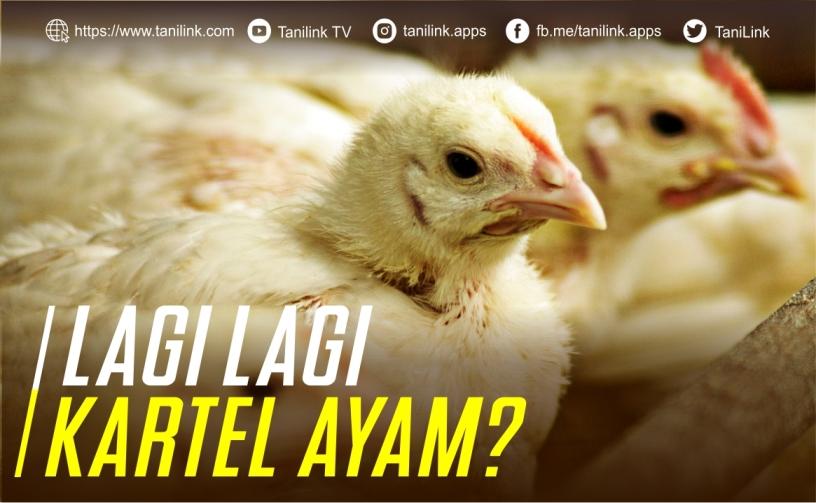 Lagi - Lagi Kartel Ayam?   Tanilink