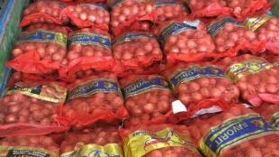 cari konsumen bawang bombay kuantitas grosir