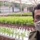 Belajar Tanam Selada Hidroponik Dari Petani Milenial
