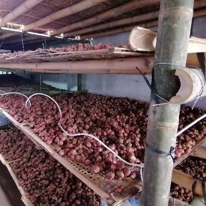 #READY# Bawang Merah (Jenis Bali Karet) Harga belum termasuk ongkir..!!