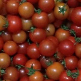 Tomat Cherry
