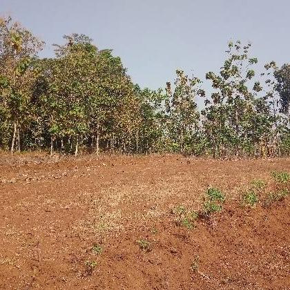Lahan Pertanian Kering