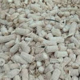 Janggel /jagung